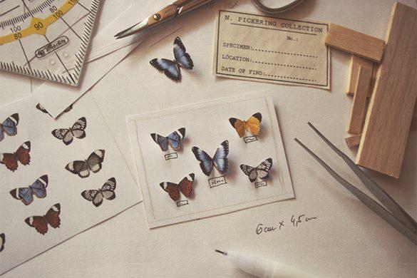 WIP – Butterfly shadow box